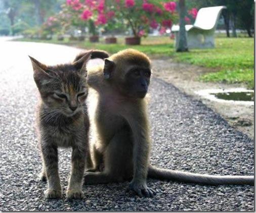 gato y mono