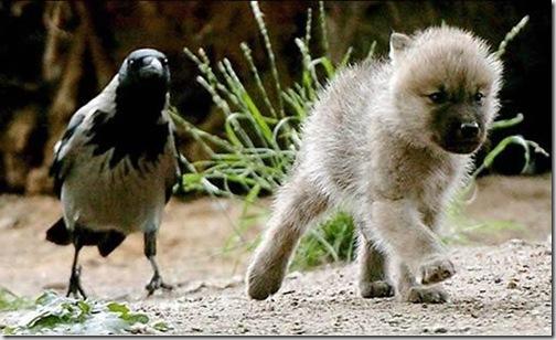 huyendo de paloma